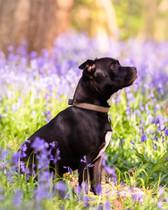 Outdoor location pet portrait sessions B