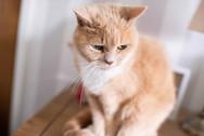 DeeLights Photography Pet Portraits (9).