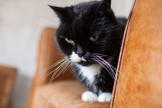 DeeLights Photography Pet Portraits (49)