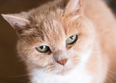 DeeLights Photography Pet Portraits (102