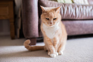 DeeLights Photography Pet Portraits (65)