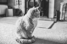 Outdoor Location & Home Pet Portrait Pho
