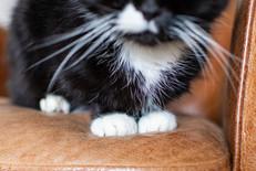 DeeLights Photography Pet Portraits (45)