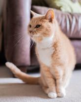 DeeLights Photography Pet Portraits (61)