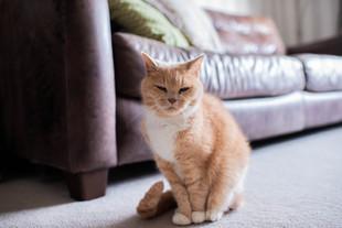 DeeLights Photography Pet Portraits (70)