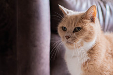 DeeLights Photography Pet Portraits (67)
