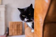 DeeLights Photography Pet Portraits (54)