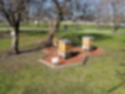 Jack's Chicago bee grove.jpg