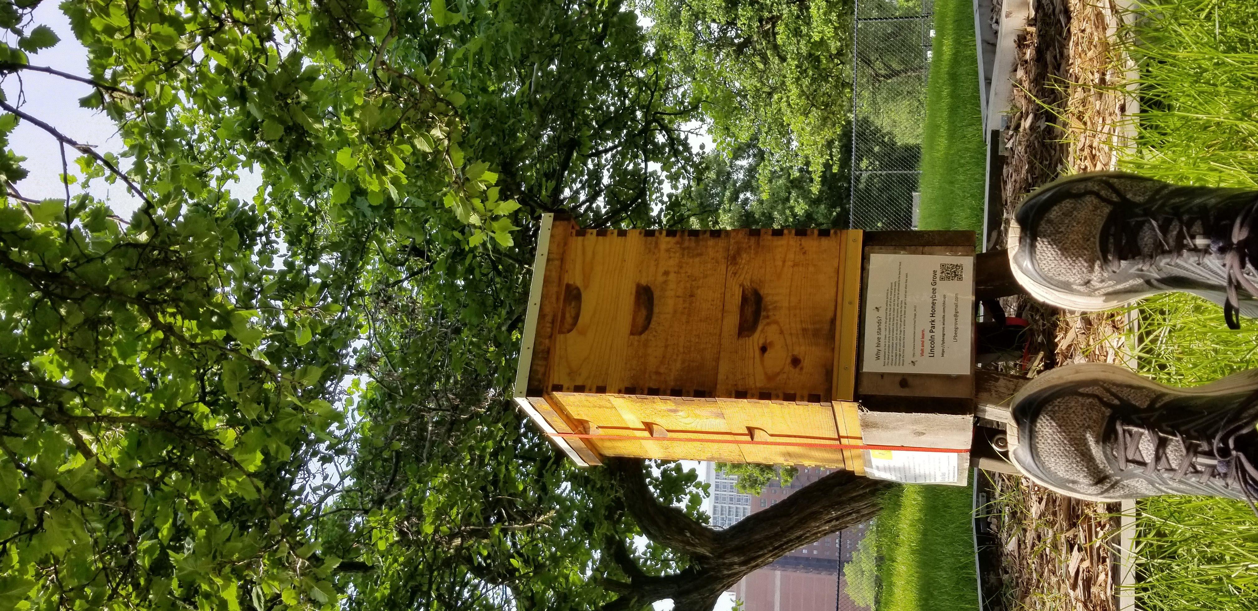 summer hive