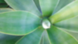 plant-2780418_1920.jpg