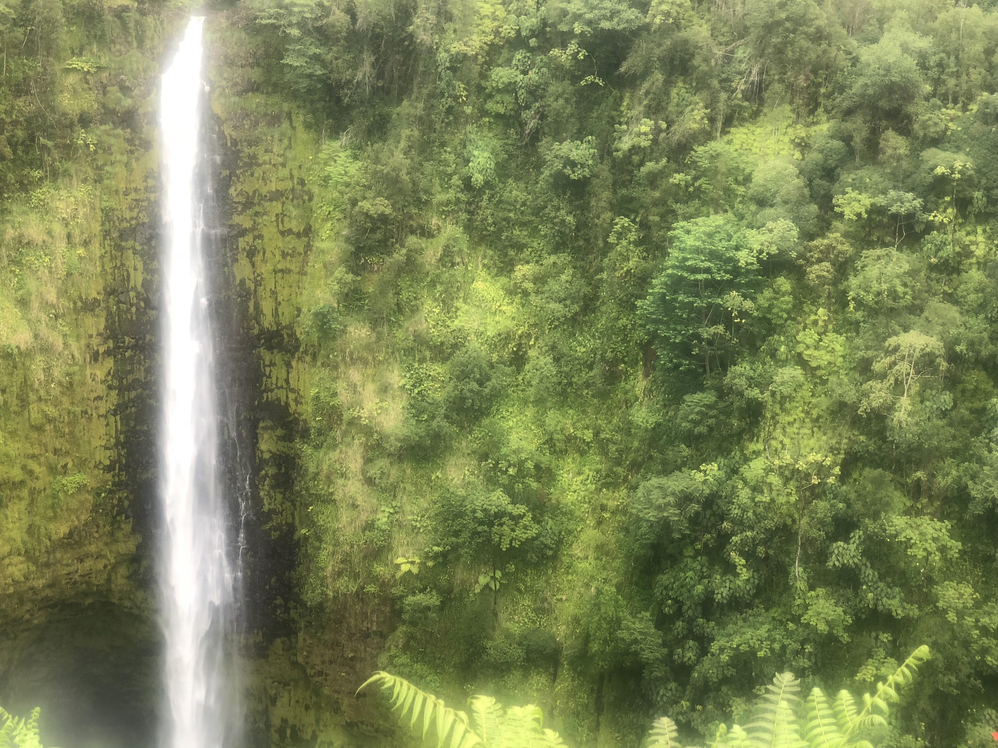akaka falls ||| hilo hawaii || usa