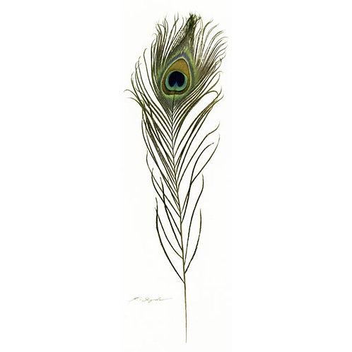 栞 Peacock