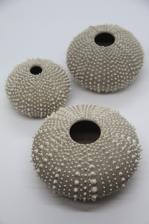 Small Sea Urchin