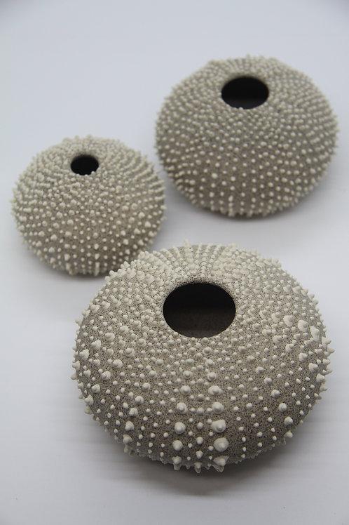 Urchin- Small