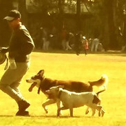 Javier Astorga Walking With his Dogs
