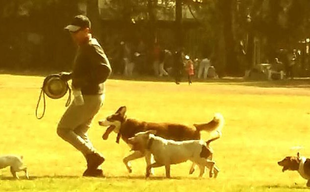 Javier Astorga Walking With his Dogs