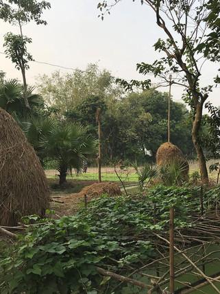 Nature en Indonésie