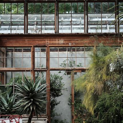 Maison de verre & nature luxuriante