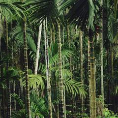 Original Home Forêt de bambou