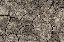 soil-3604093_1920.jpg