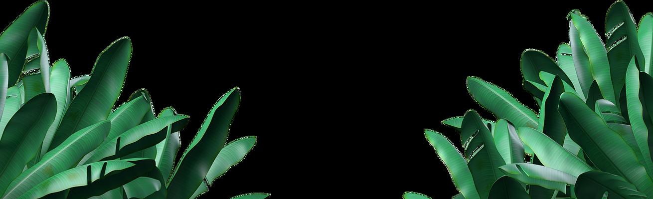 planten_transparant.png