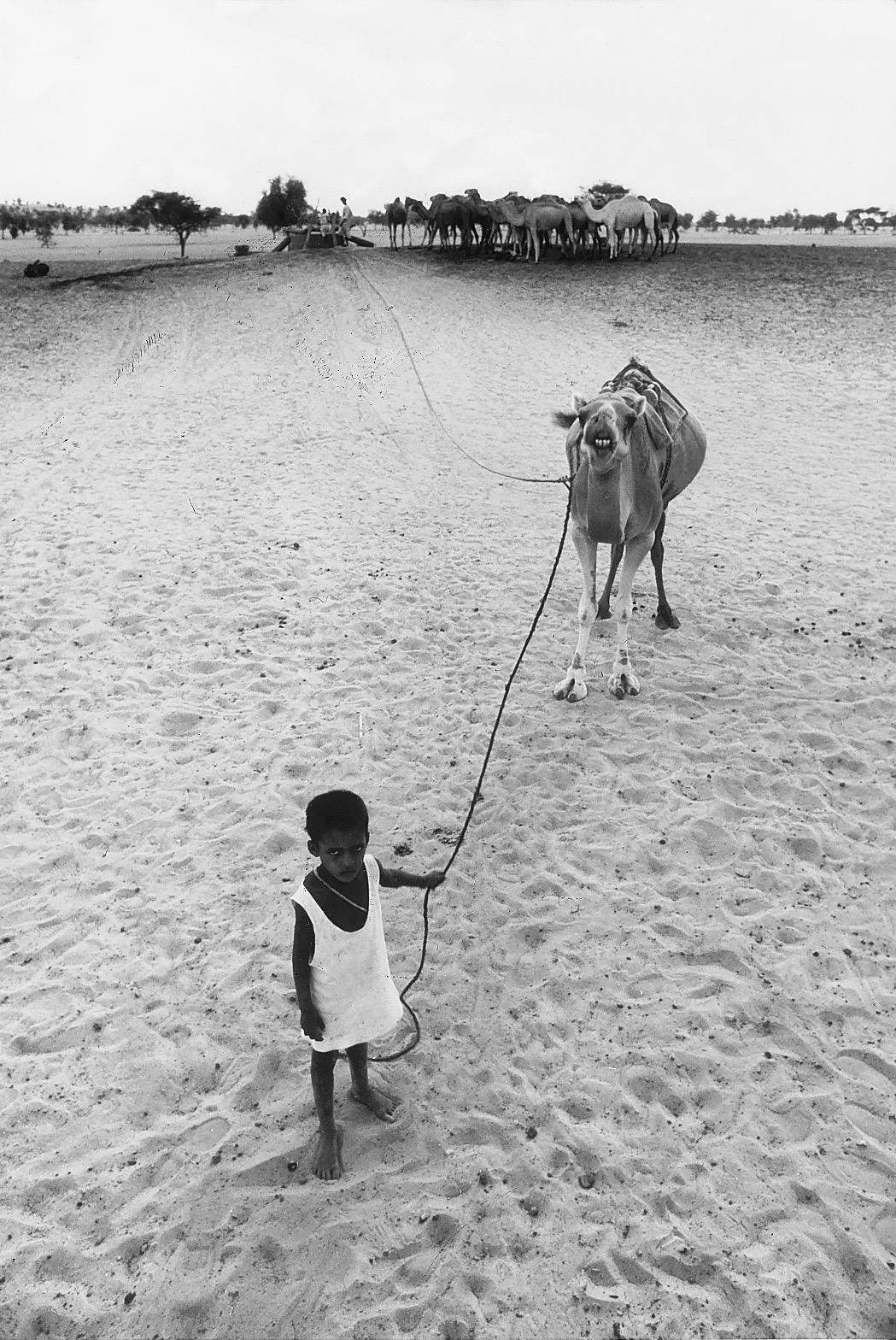 kid&camel