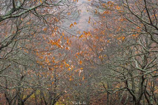 Las últimas del otoño