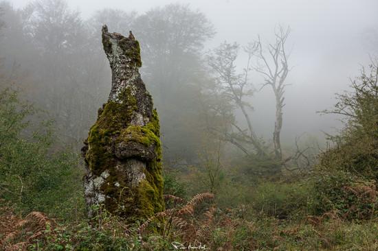 Apariciones en la niebla