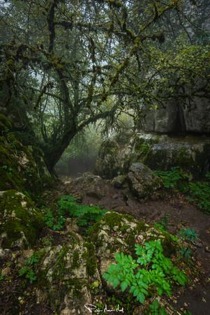 Verde: El color de la naturaleza