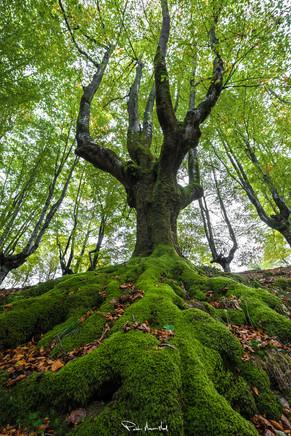 La mano de la naturaleza