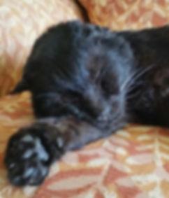 Rescue cat Bear napping on sofa