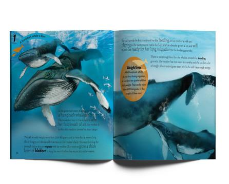 Life Cycles of Marine Animals