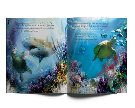 Life Cycles of Marine Animals.