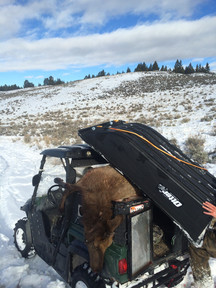 Wyoming Guided Elk Hunts with O'Brien Creek Outfitters