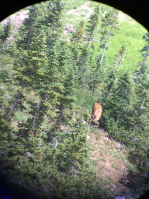 Wyoming Guided Deer Hunts with O'Brien Creek Outfitters