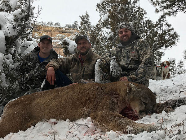 Wyoming guided mountain lion hunt