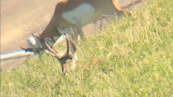 Wyoming Guided Antelope Hunts with O'Brien Creek Outfitters
