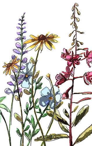 Combined flowers.jpg