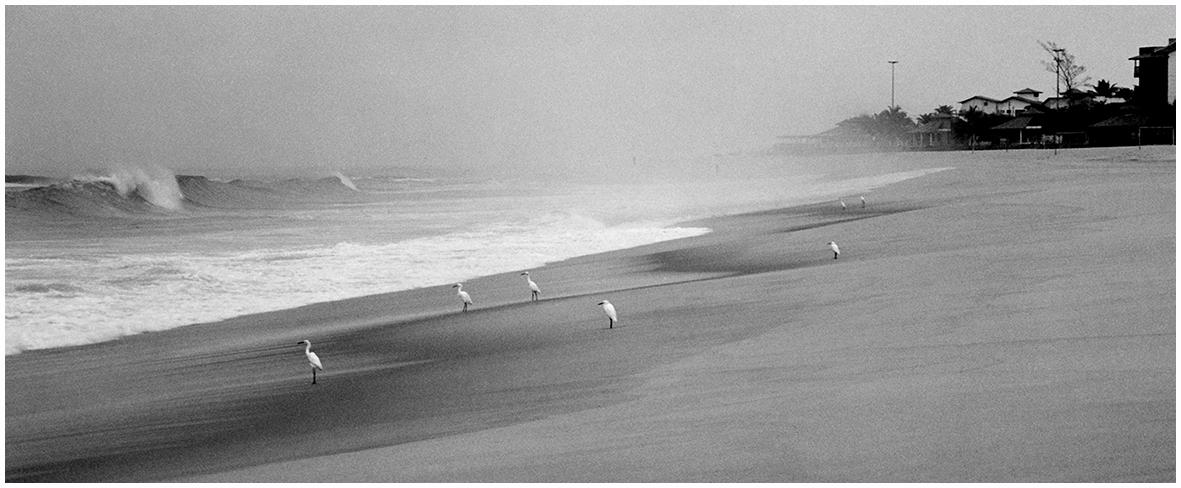 garzas en la playa