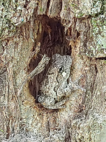 Frog in Tree.png