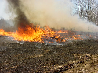 Presribed burn at a State Forest in Connecticut