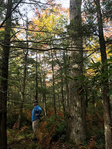 Recreation at Great Mountain Forest.jpg