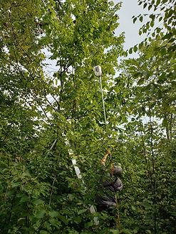 ACF_Collecting Burs from Naugatuck State