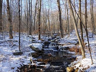 Winter brook.jpg