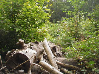 Deadwood retention Worthington MA.jpg