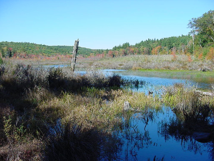 Beaver Meadows