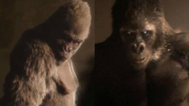 black-and-white-gorillas-argue-in-2015-t