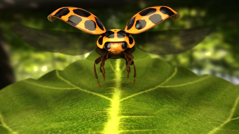 ladybug_PromoStill (2).png