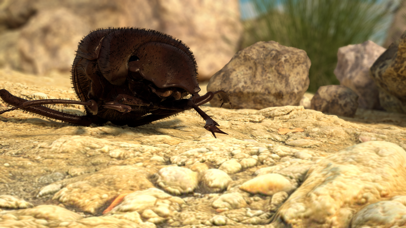 dungbeetle_PromoStill (1).png