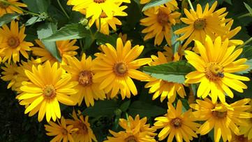 Pollinators Heaven